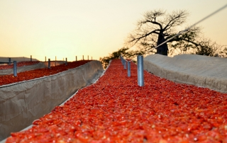Sundried Tomatoes Africa
